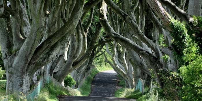 Dark-Hedges-of-Armoy