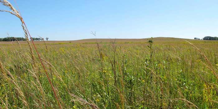 Restored-Prairie