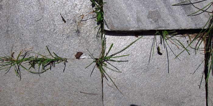 Grass-in-the-Seam