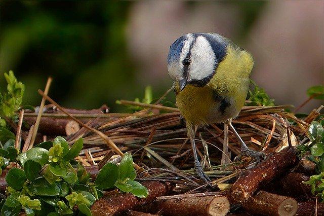 Irish Birds - Bird's Nests