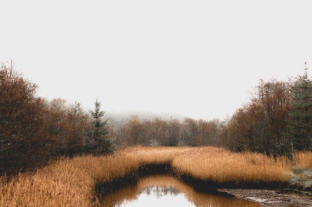 Irish Bog Land