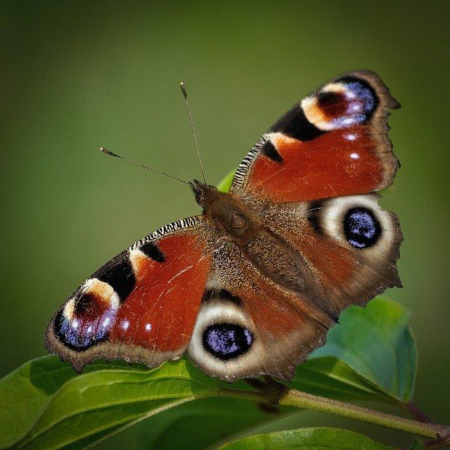 Irish Butterflies